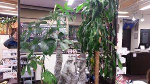 植物 エネルギー http://www.ankh-jp.com