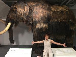 北大総合博物館 http://www.ankh-jp.com