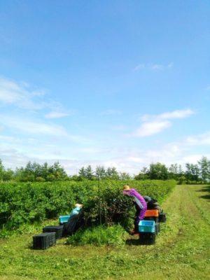 Honeysuckle plantation haskap beauty head spa https://www.ankh-jp.com/english/