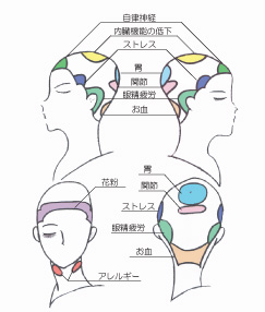 Scalp zones      http://www.ankh-jp.com/english/