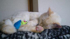 猫 オキシトシン http://www.ankh-jp.com/owners-blog/