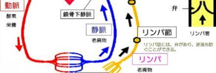リンパ循環 http://www.ankh-jp.com
